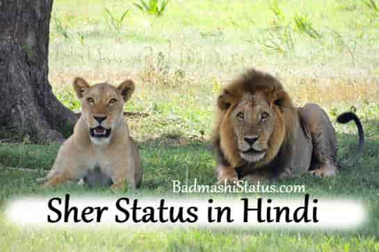 Sher Status in Hindi – Sher Status Shayari 2020